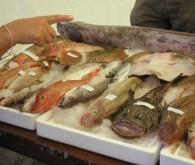 Fish festival 6